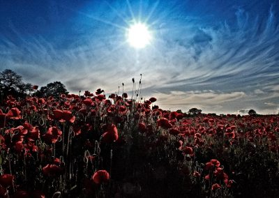 Afternoon in the Poppy Field